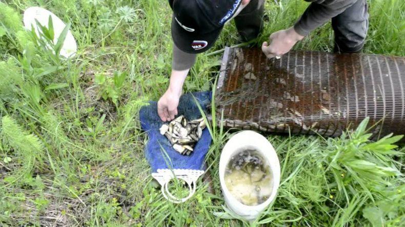 Как ловить окуня на живца и сохранить приманку живой