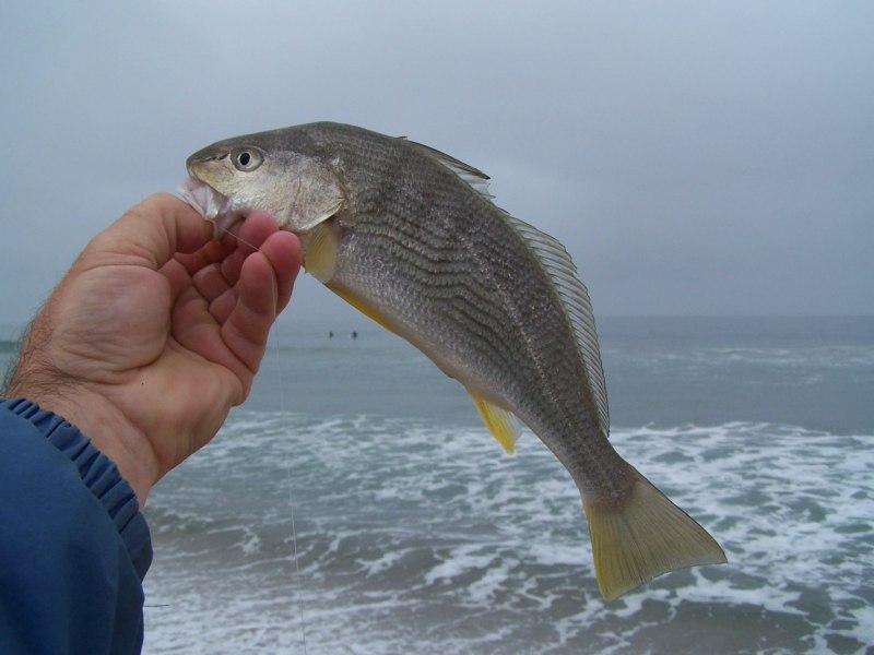 Ловля омуля: описание рыбы, повадки, влияющие на рыбалку